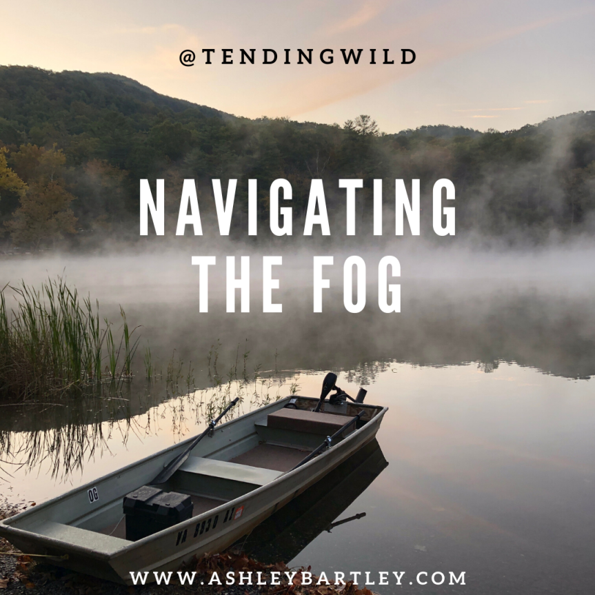 navigating the fog (3)